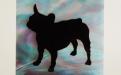 Bull Dog  Francese